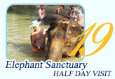 Elephant Sanctuary Half Day Visit