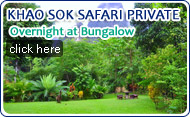 Khaosok Safari Private Overnight at Bungalow